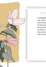 Cattail Moonshine & Milkweed Medicine - Tammi Hartung