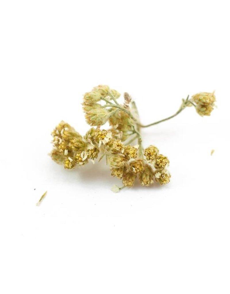 Yarrow Flowers, LOCAL, Organic, bulk/oz