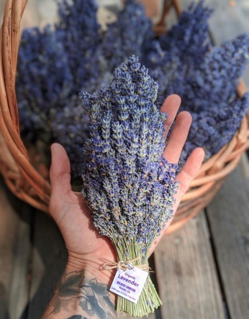 Lavender Bundle, Organic - Wildcat Farms
