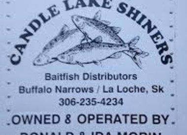 CANDLE LAKE SHINNERS