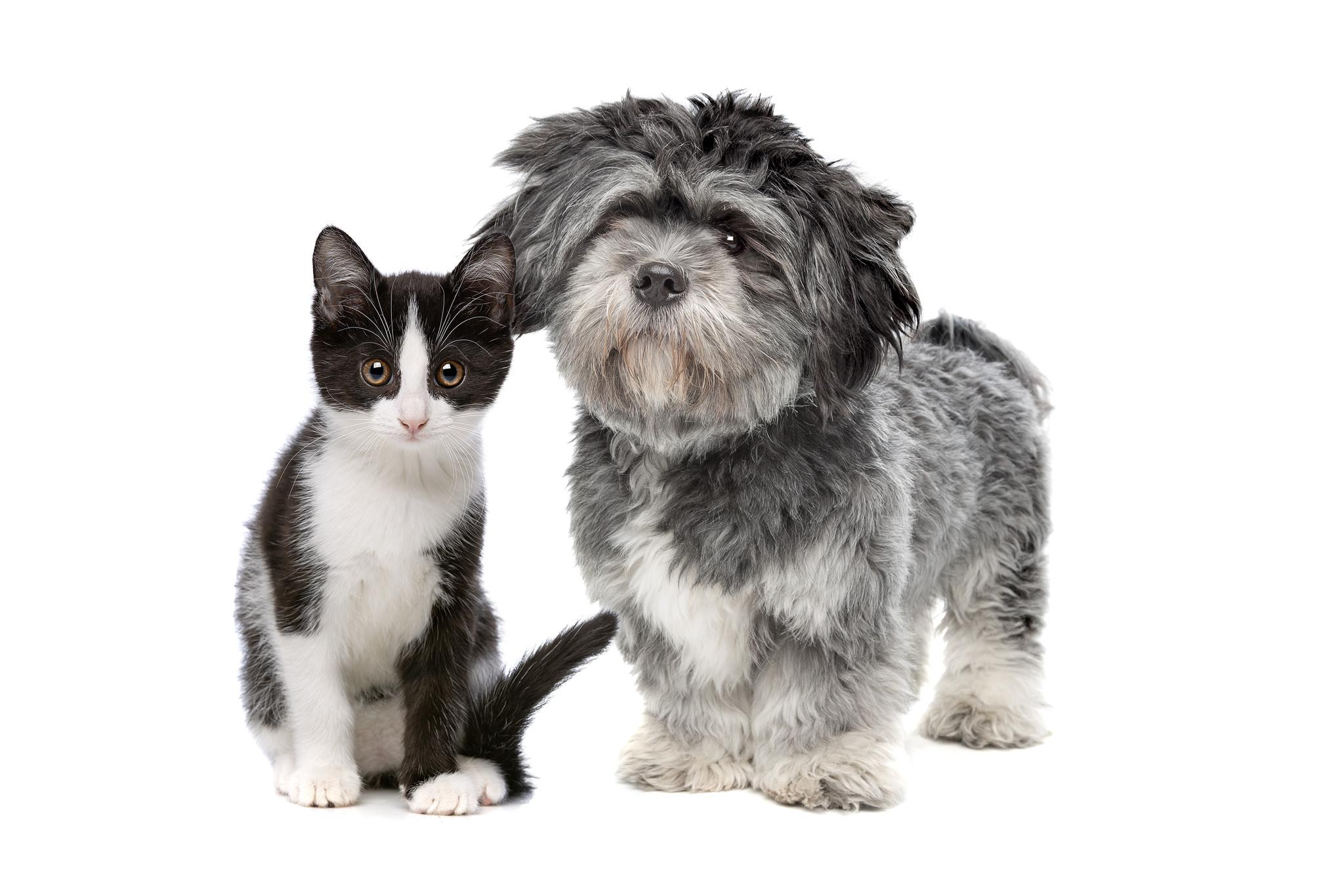 How CBD Helps Pets