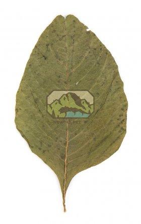 Newcal Pet NewCal Amaranth Leaves (20 Pack)