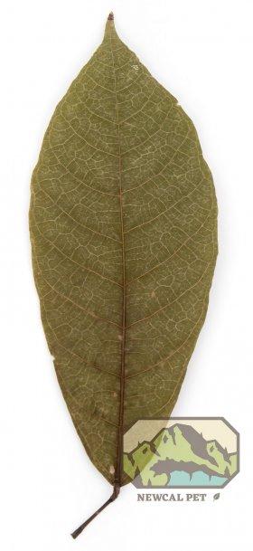 Newcal Pet NewCal Cocoa Leaves (10 Pack)