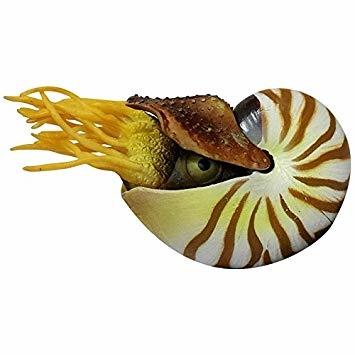 Aquatop AquaTop Silicone Nautilus