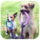Beco Pets Beco Hoop on a Rope