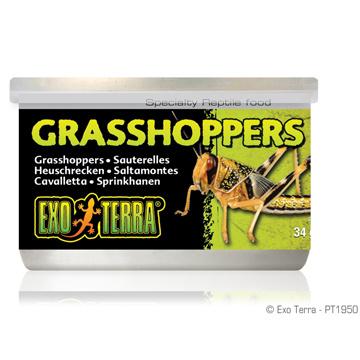 Exo Terra Exo Terra Canned Grasshoppers 1.2 oz