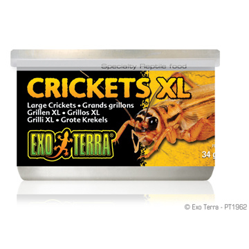 Exo Terra Exo Terra Canned Crickets XL 1.2 oz