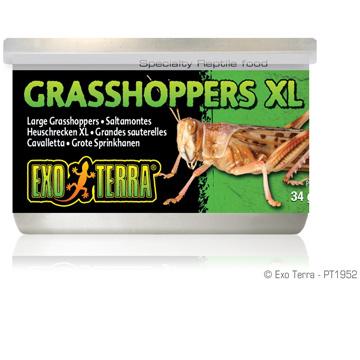 Exo Terra Exo Terra Canned Grasshoppers XL