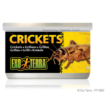 Exo Terra Exo Terra Canned Crickets 1.2 oz