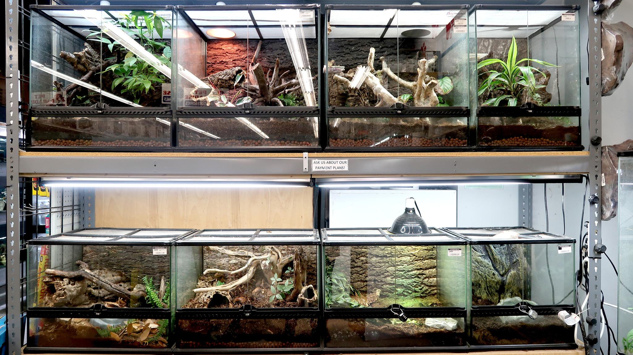 Reptile Tanks