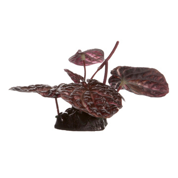 Fluval Fluval Red Lotus - Small - 10 cm (4in) with Base