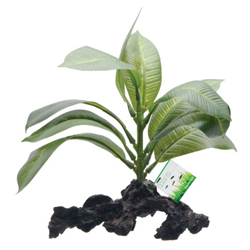 Fluval Fluval Decorative Plants, Stemped Anubias, 17cm (7in) on Root