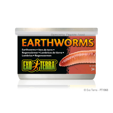 Exo Terra Exo Terra Canned Earth Worms 1.2oz