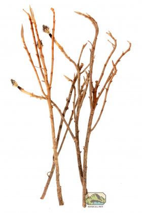 Newcal Pet Newcal Magnolia Branch Large
