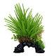 Aqualife Fluval Aqualife Deco Scapes Princess Pine Mix - 30.5 cm (12 in)