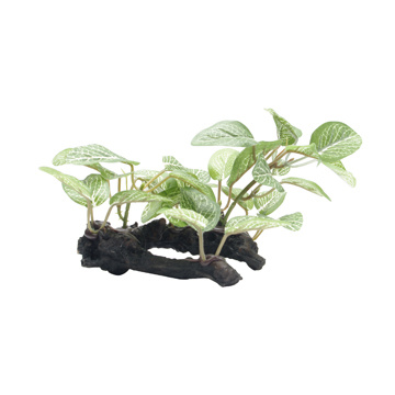Fluval Fluval Small African Shade Leaf on Root - 10 cm (4in)