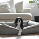 Be One Breed Be One Breed Snuggle Bed - Light Grey