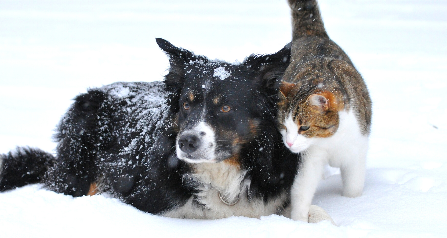 Keep your Pets safe during cold weather!