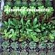 """1"""" Assorted Succulent"""