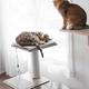 Be One Breed Be One Breed Katt3 Evo Cat-Grey