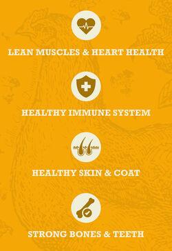 Acana Acana Healthy Grains Free Run Poultry Recipe