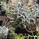 """4"""" Assorted Succulent"""