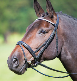 BRIDLE AVIGON NEW YORK SHIRES