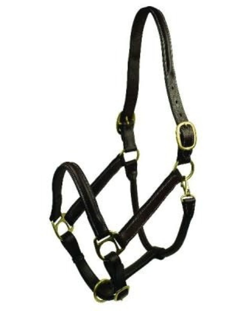 "Halter Leather 3/4"" Raised Padded DBL Buckle Crown"