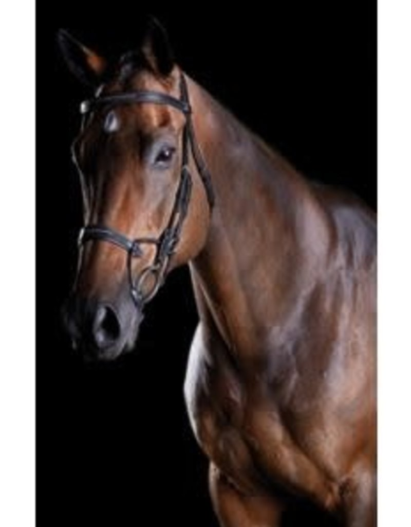 Collegiate Comfitec Bridle Fancy Stitch