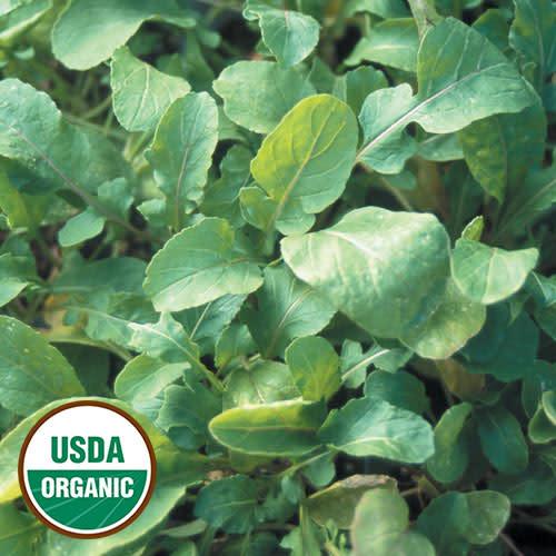 Seed Savers Exchange Arugula Seeds - Arugula (organic)
