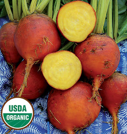 Seed Savers Exchange Beet Seeds - Burpee's Golden (organic)
