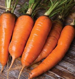 Seed Savers Exchange Carrot Seeds - Danvers