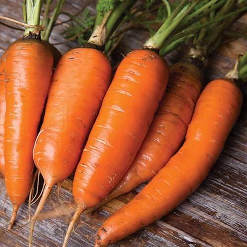Seed Savers Exchange Carrot Seeds - Danvers