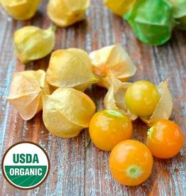 Seed Savers Exchange Ground Cherry Seeds - Loewen Family Heirloom (organic)