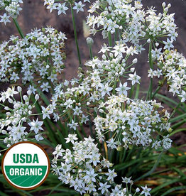 Seed Savers Exchange Herb Seeds - Garlic Chives (organic)