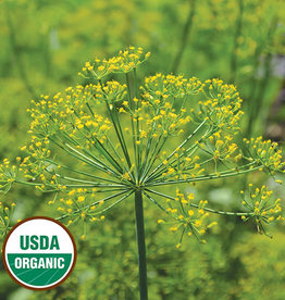 Seed Savers Exchange Herb Seeds - Dill Grandma Einck's (organic)
