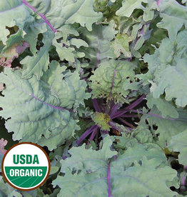 Seed Savers Exchange Kale Seeds - Red Russian (organic)