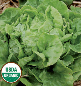 Seed Savers Exchange Lettuce Seeds - Three Heart (organic)