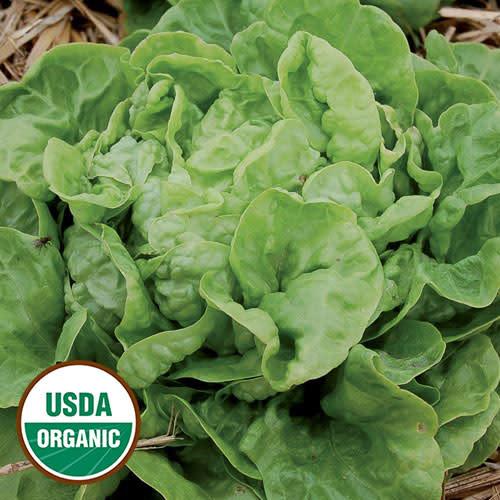 Seed Savers Exchange Lettuce Seeds - Three Heart (organic)