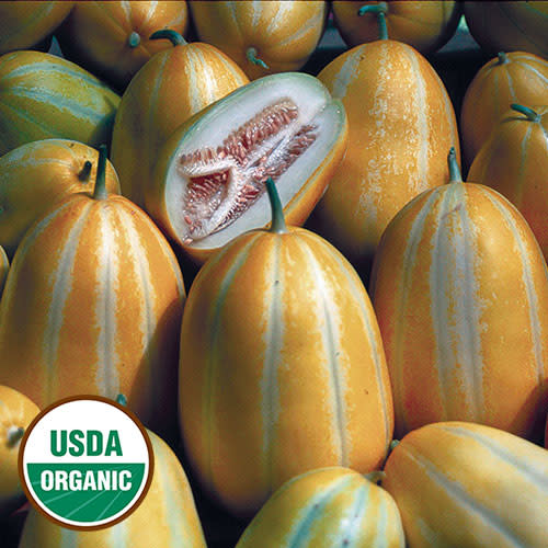 Seed Savers Exchange Melon Seeds - Early Silver Line (organic)