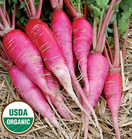 Seed Savers Exchange Radish Seeds - China Rose (organic)