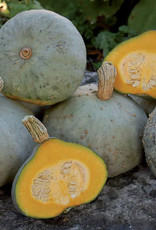 Seed Savers Exchange Squash Seeds - Silver Bell