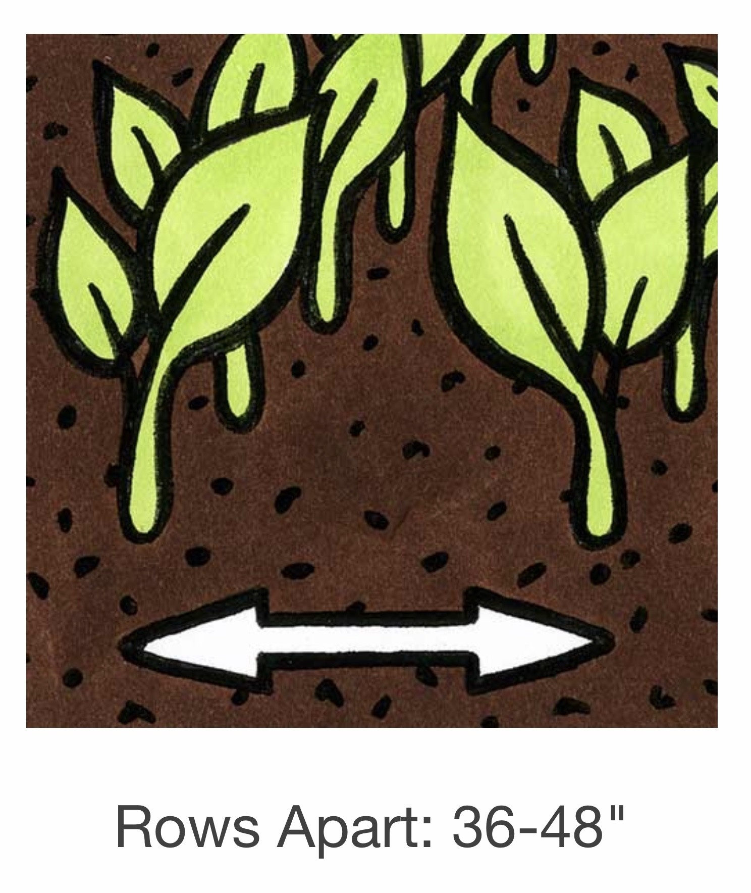 Seed Savers Exchange Bean Seeds - Fin de Bagnol
