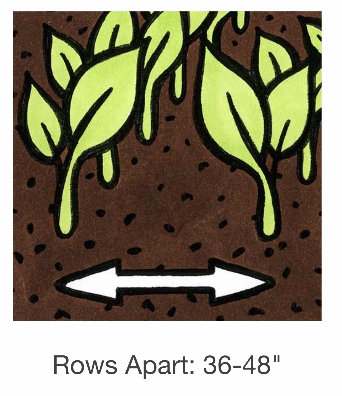 Seed Savers Exchange Corn Seeds - Two Inch Strawberry Popcorn (organic)