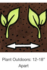 Seed Savers Exchange Ground Cherry Seeds - Aunt Molly's (organic)