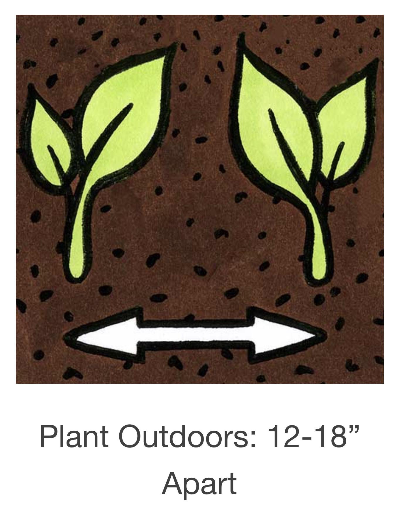 Seed Savers Exchange Ground Cherry Seeds - Loewen Family Heirloom (organic)