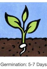 Seed Savers Exchange Leek Seeds - Esther Cook (organic)