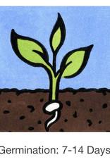 Seed Savers Exchange Lettuce Seeds - SSE Lettuce Mixture