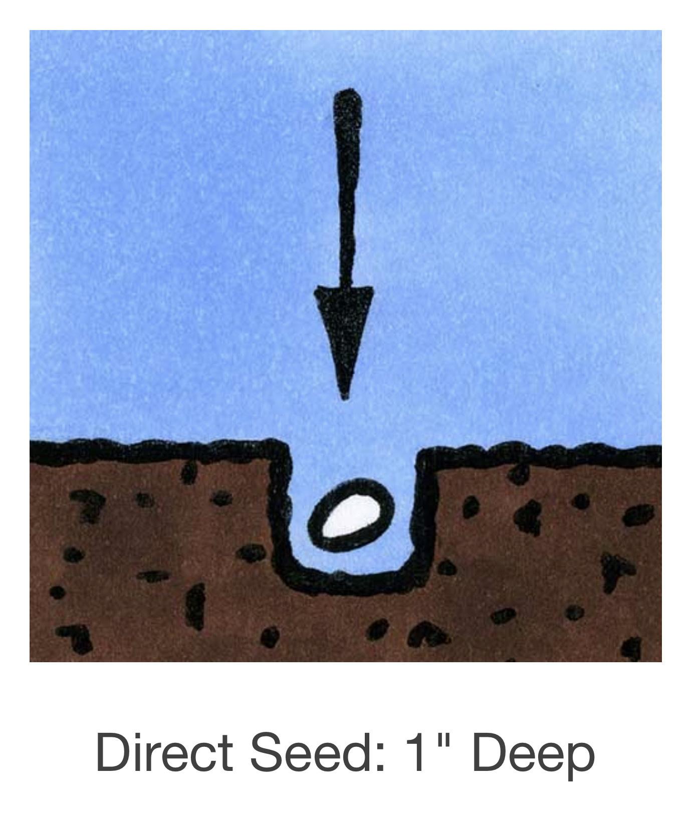 Seed Savers Exchange Melon Seeds - Tigger (organic)