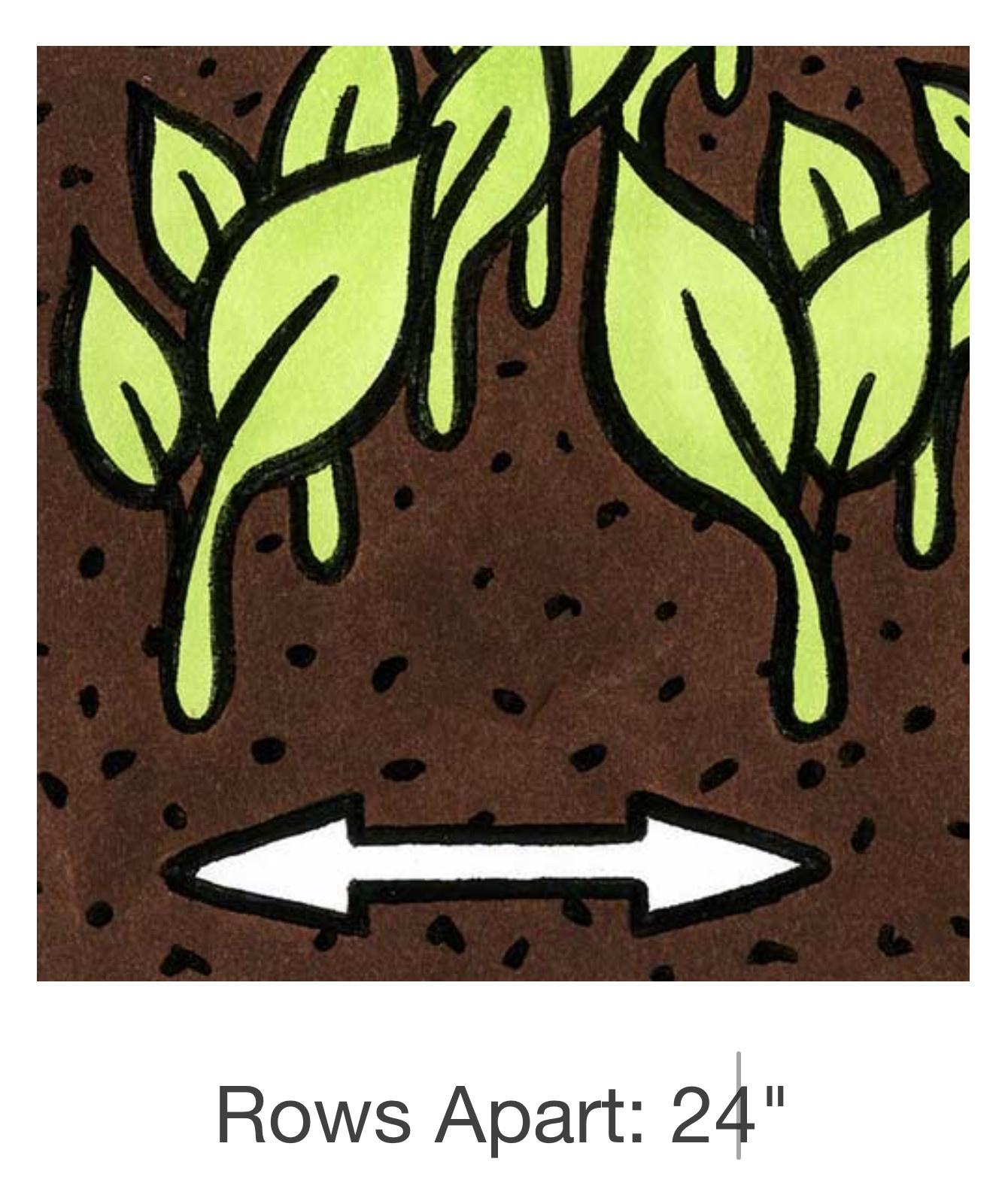 Seed Savers Exchange Pea Seeds - Amish Snap